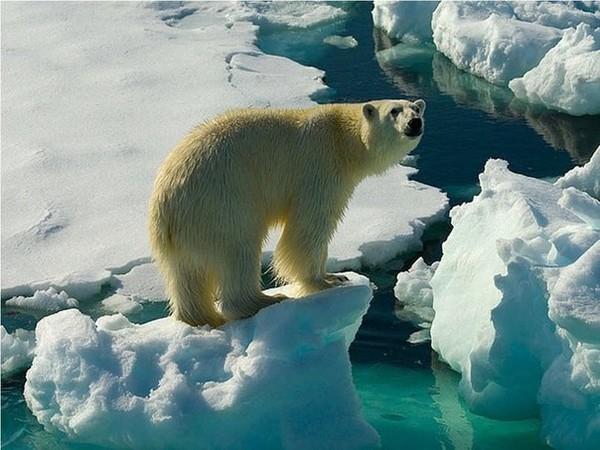 Росатом и National Geographic представили серию фильмов об уникальных уголках планеты, которые могут исчезнуть из-за глобального потепления